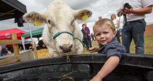 JJ Maher from Roscrea splashing around with his family's Belgian Blue entry at the 2015 Tullamore Show and AIB National Livestock Show. Photograph: Jeff Harvey