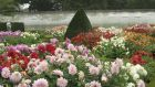 The new dahlia garden in Aras an Uachtarain, which contains several Irish-bed cultivars include Dahlia 'John Markham'. Photograph: Richard Johnston