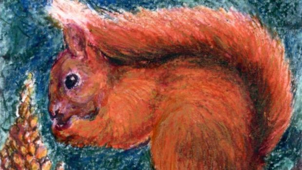 Fighting back: the red squirrel is now in all 32 counties. Illustration: Michael Viney
