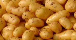 The IFA and Teagasc have begun a trial  to increase  acreage given over to baby potatoes. Photograph: Thinkstock