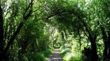 A walk for the weekend: The Gearagh, Macroom, Co Cork