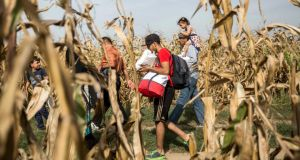 Migrants cross a cornfield at the border between Serbia and Croatia near Sid, Serbia,  September 16th, 2015. Photograph: Balaz Mohai/EPA