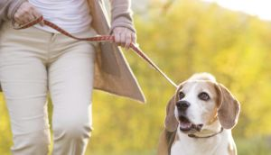 Walking with a companion – whether human or canine – can keep you motivated. Photograph: Thinkstock