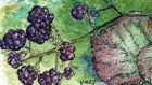 Blackberries come in many shapes and sizes. Illustration: Michael Viney