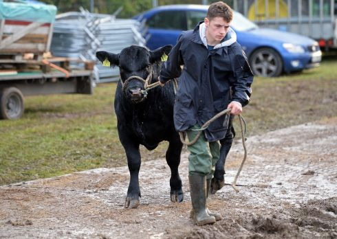 Opening day at the National Ploughing Championships 2015. Photograph: Eric Luke/The Irish Times