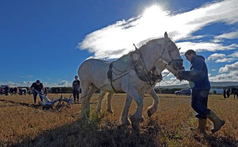 Sunshine and horse power. Photograph: Eric Luke / The Irish Times