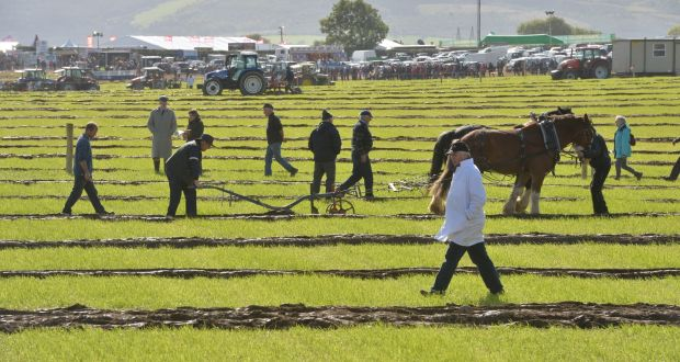 The Special Horse Class ploughing on the last day of the 2015 National Ploughing Championships in Ratheniska, Stradbally, Co. Laois. Photograph: Alan Betson / The Irish Times