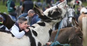 Derek Cooke from Newcastle West, Limerick, with his donkeys at the Ballinasloe October Fair. Photograph: Joe O'Shaughnessy.