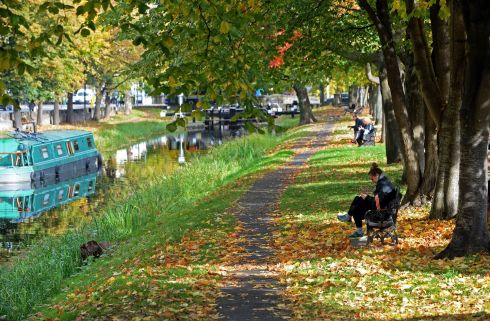 CANAL BANK WALK: Autumn leaves along the bank of the Grand Canal, off Baggot Street, Dublin. Photograph: Eric Luke/The Irish Times