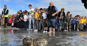 Fishermen have long blamed seals for reducing species that are fished commercially in Irish waters. Photograph: The Irish Times