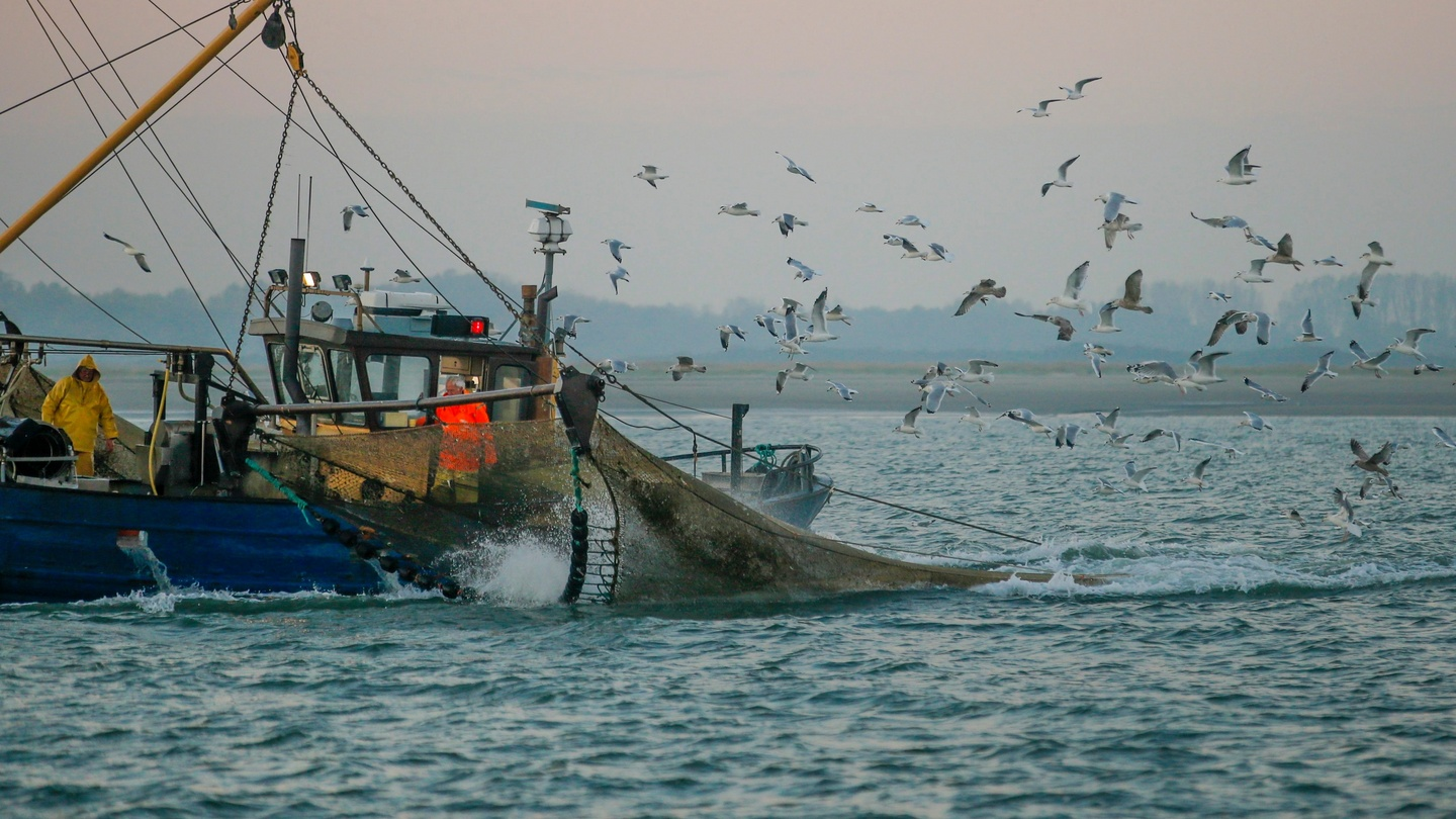 Fishing industry s slim margins generates perfect storm for Fishing in ireland