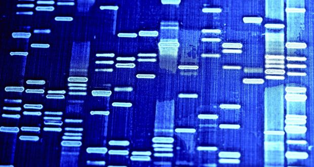 legal aspects of dna fingerprinting essay Was subdivided into the scientific, procedural, legal, and ethical aspects of the technology dna fingerprinting, also known as dna typing or dna profiling.