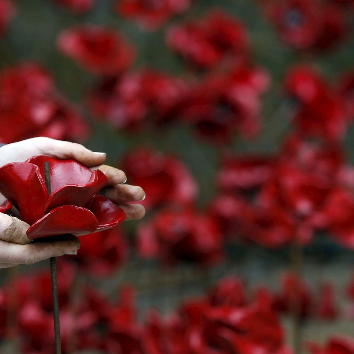 Donald Clarke Lets Not Start Another War Over The Wearing Of The Poppy