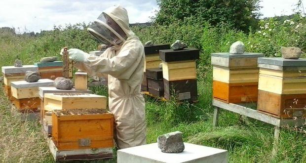 Hive talkin': Bee genes could be key to honeybee survival