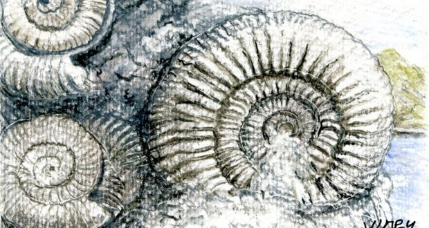 Another Life: From dinosaurs to sea lilies, the fossil
