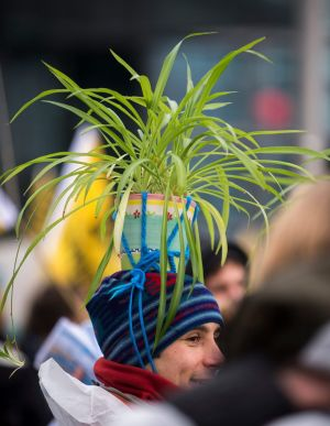 BERLIN: A demonstrator wears a plant pot on his head during a 'Global Climate March' in Berlin. Photograph: Gregor Fischer/EPA