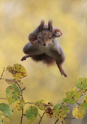 Highly commended. Photograph: Julian Rad/Comedy Wildlife Photography Awards