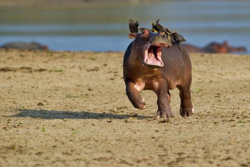 Highly commended. Photograph: Marc Mol/Comedy Wildlife Photography Awards