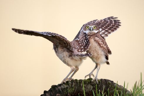 Highly commended. Photograph: Megan Lorenz/Comedy Wildlife Photography Awards