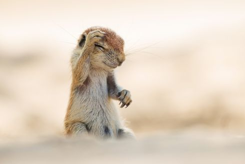 Highly commended. Photograph: Yuzuru Masuda/Comedy Wildlife Photography Awards