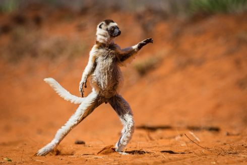 Highly commended. Photograph: Alison Buttigieg/Comedy Wildlife Photography Awards