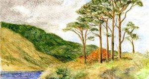 Scots pines at Doolough: remnants of Ireland's ancient pines lay buried beneath. Illustration: Michael Viney