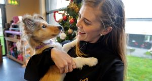 Caroline Lamb at the DSPCA rescue and rehoming centre at Mount Venus Road, Rathfarnham, with 10-week-old Collie-cross puppy Marty which is looking for a foster home. Photograph: Alan Betson/The Irish Times