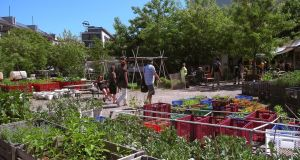 Prinzessinnengarten in Berlin, a community garden run by a committee of 10 or 12 people who offer workshops on growing and spaces for tool and bike repair. Photograph: Ullstein Bild/Getty Images
