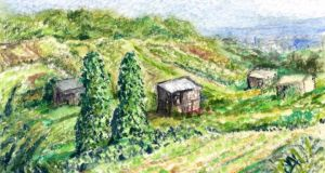 Allotments: a big part of the Galway food scene. Illustration: Michael Viney