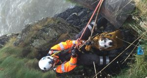 A dog named Hooch has been rescued by the Irish Coast Guard after becoming trapped on sea cliffs in Dublin. Photograph: Irish Coast Guard via Fergus Cooney