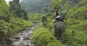 Asia Thailand Northern Thailand. northeast of Chiang Mai. Elephant Trekking.