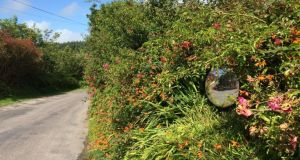 A hedgerow in west Cork in August 2015. Photograph: Dan Griffin/The Irish Times