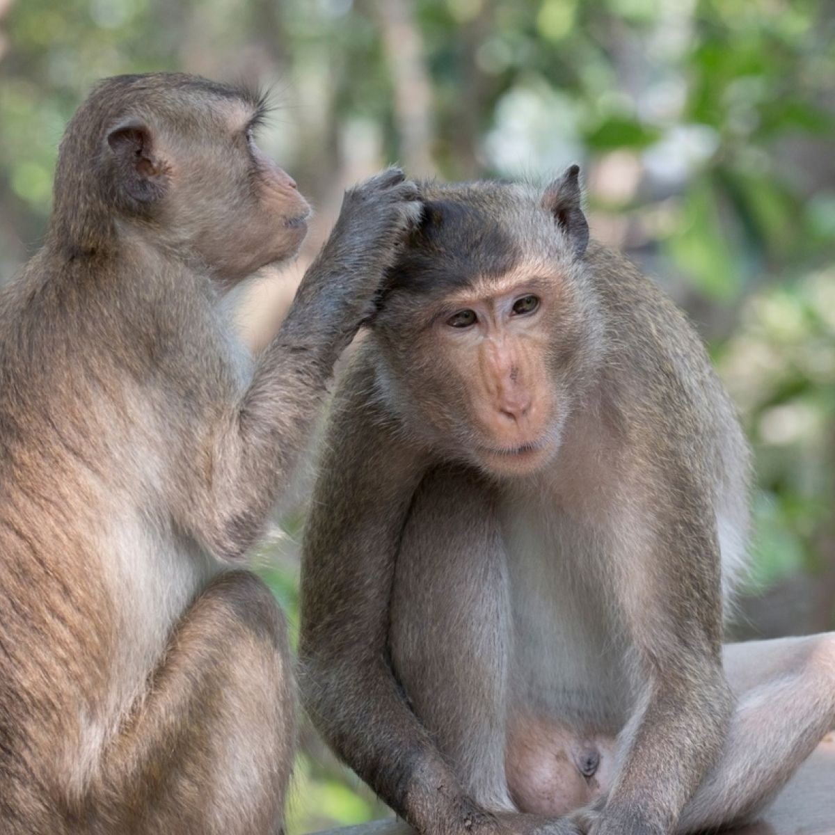 pics Genetically Modified Monkeys Might Aid Autism Research