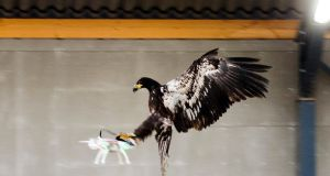 An eagle attacks a drone  in Rotterdam, Netherlands. Photograph: Nederlands Politie/Reuters