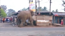 Eyewitness footage captures wild elephant on rampage in Indian village