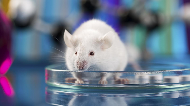 Image result for Mice Model