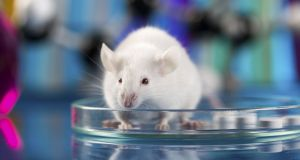 """Mice bring several really important advantages for discovery-based research."" Photograph: Thinkstock"