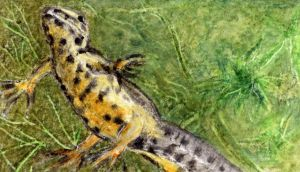 Wetlands: a home for wildlife, including newts. Illustration: Michael Viney