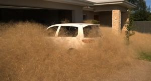 A car surrounded by hairy panic outside a home in the town of Wangaratta. Photograph: AFP/Getty Images