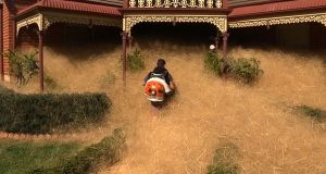 A man clears out fast-growing tumbleweed known as hairy panic from a home in the town of Wangaratta. Photograph: AFP/Getty Images