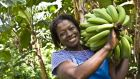 Consumer spending on Fairtrade products rose  to €250 million last year