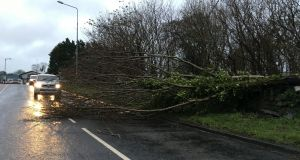 A tree down in Clonee village in Co Meath as Storm Jake batters the country. Photograph: Alan Betson/Irish Times