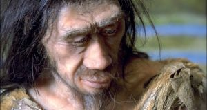The ape-like heavy jaw and teeth were more or less gone by the time Homo erectus appeared two million years ago. Photograph: Xavier Rossi/Gamma-Rapho via Getty Images