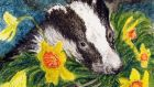 A friend welcomed a badger sett on his land even when they wrenched a sheaf from his best daffodils, just nicely in flower. Illustration:  Michael Viney