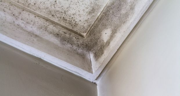 Tremendous How Do I Get Rid Of Damp Stains On My Bathroom Ceiling And Download Free Architecture Designs Scobabritishbridgeorg