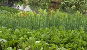 It's a good time to prepare vegetable beds in kitchen gardens and allotments.  Photograph: Richard Johnston