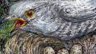 Cheating heart: cuckoos lay eggs in other birds' nests. Illustration: Michael Viney