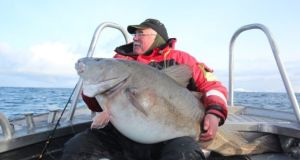 Bert Williams with new British record cod