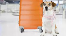 Travel advice on . . . pets