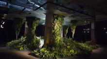 The Lowline Lab in New York's Lower East Side, which is already yielding strawberries and miniature pineapples.  Photograph: John Taggart/Bloomberg